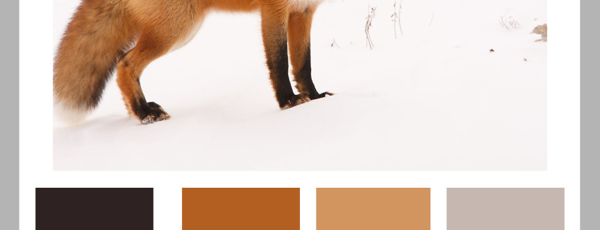 Color Formula 19: The Fox in Winter